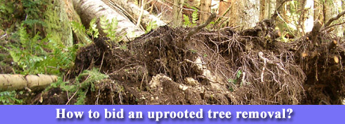 How to bid an uprooted tree.