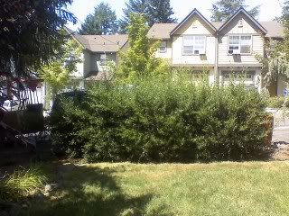 hedge-trimming-bid-example-2
