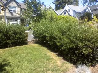 hedge-trimming-bid-example-3