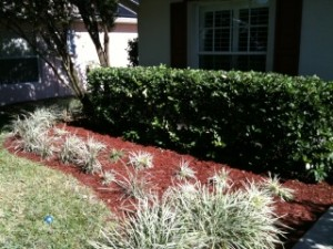 Landscape Mulch Job - Before