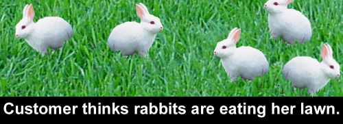 Lawn care customer thinks rabbits are eating her lawn.