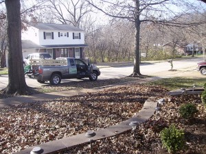 Leaf clean up job