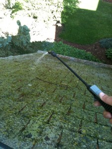 Rooftop moss removal.