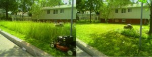 mowing-tall-grass