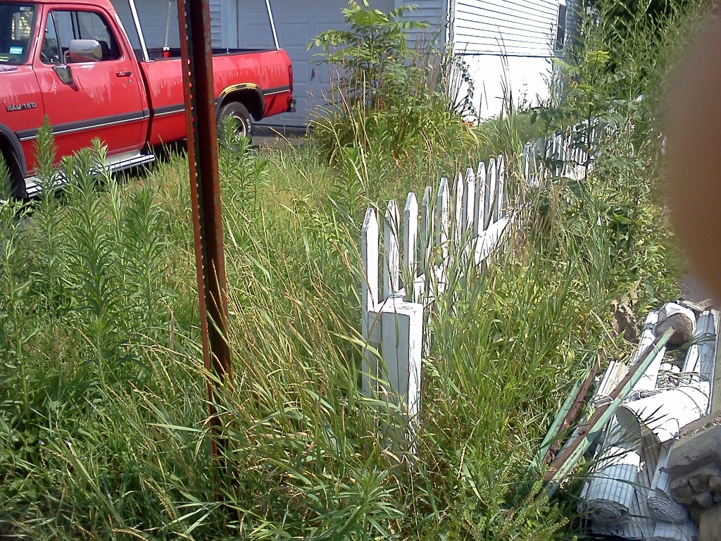 cold calling on overgrown lawns